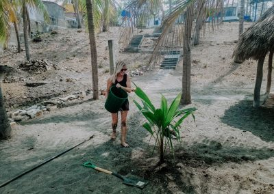 The-beginning-girl-watering-palm-tree-in-nimbu